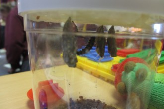 Caterpillar update in Reception class