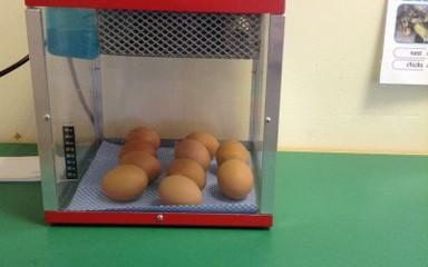 Living eggs!